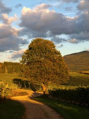 Bild: Bildquelle: Waldili / pixelio.de