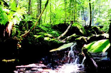 Bild: Monbachtal bei Bad Liebenzell (Foto pr,)