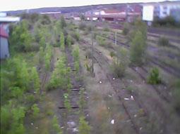 Bild: Auch stillgelegte Gleisanlagen sind eine ökologisch wichtige Nische bei knappem öffentlichem Raum..